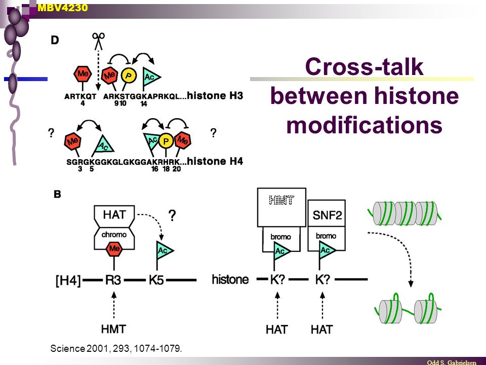 Cross-talk between histone modifications