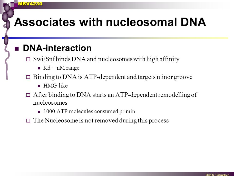 Associates with nucleosomal DNA