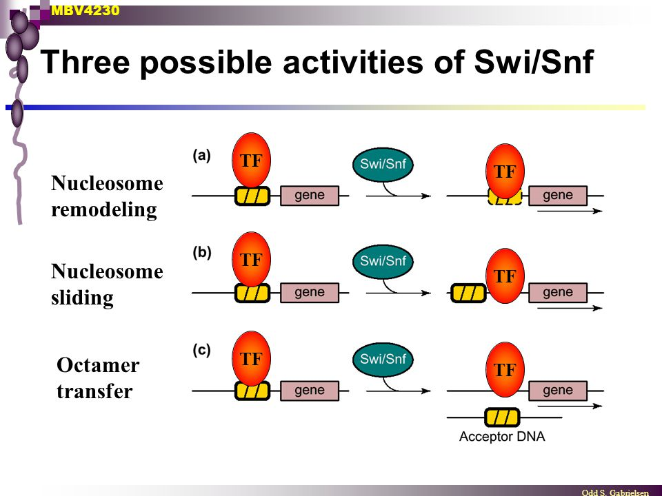 Three possible activities of Swi/Snf