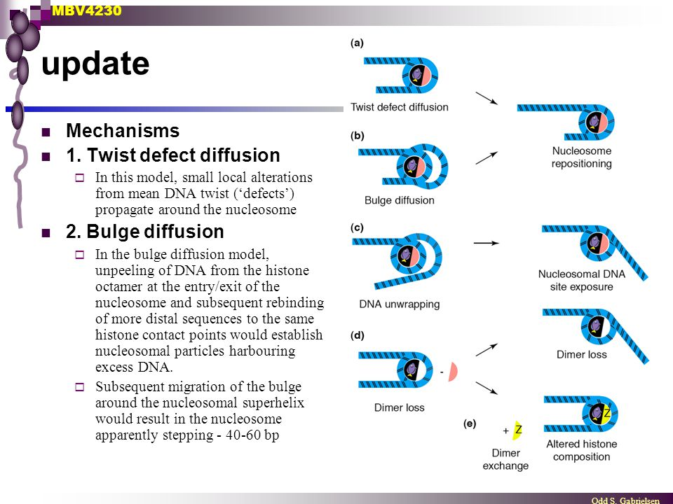 update Mechanisms 1. Twist defect diffusion 2. Bulge diffusion