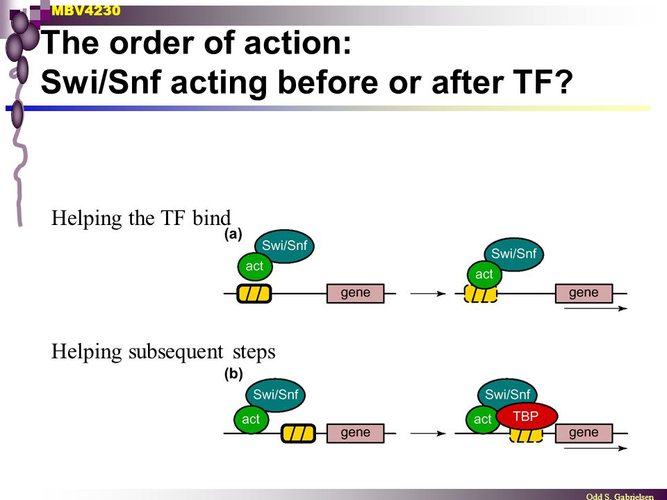 The order of action: Swi/Snf acting before or after TF