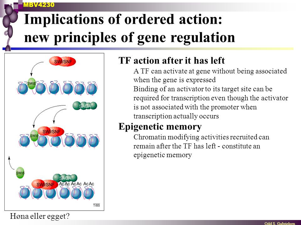 Implications of ordered action: new principles of gene regulation