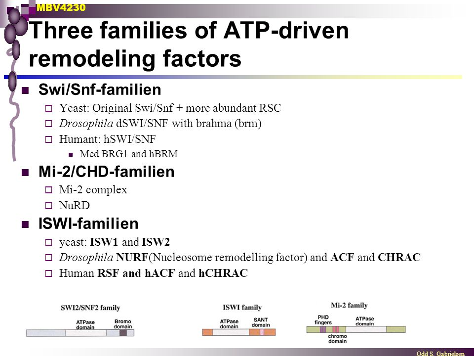 Three families of ATP-driven remodeling factors