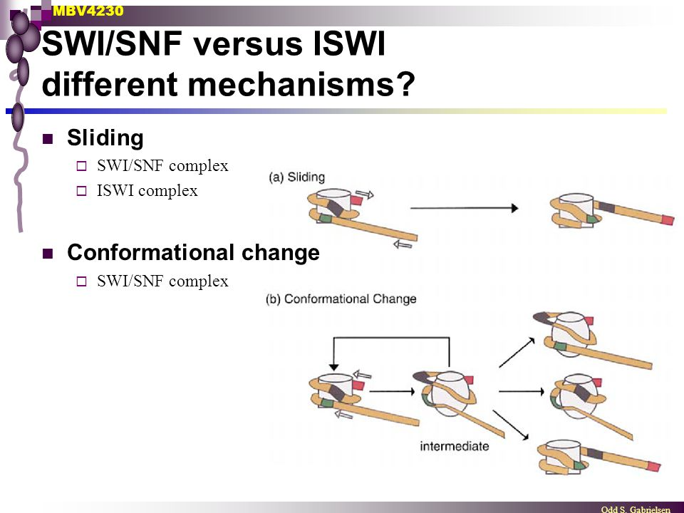 SWI/SNF versus ISWI different mechanisms