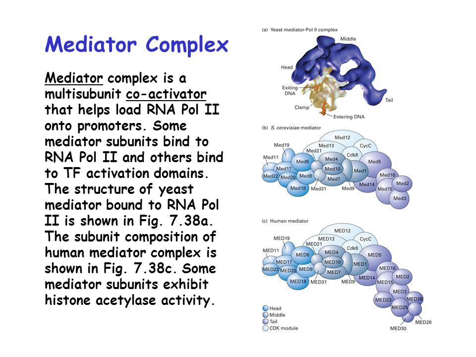 Mediator Complex