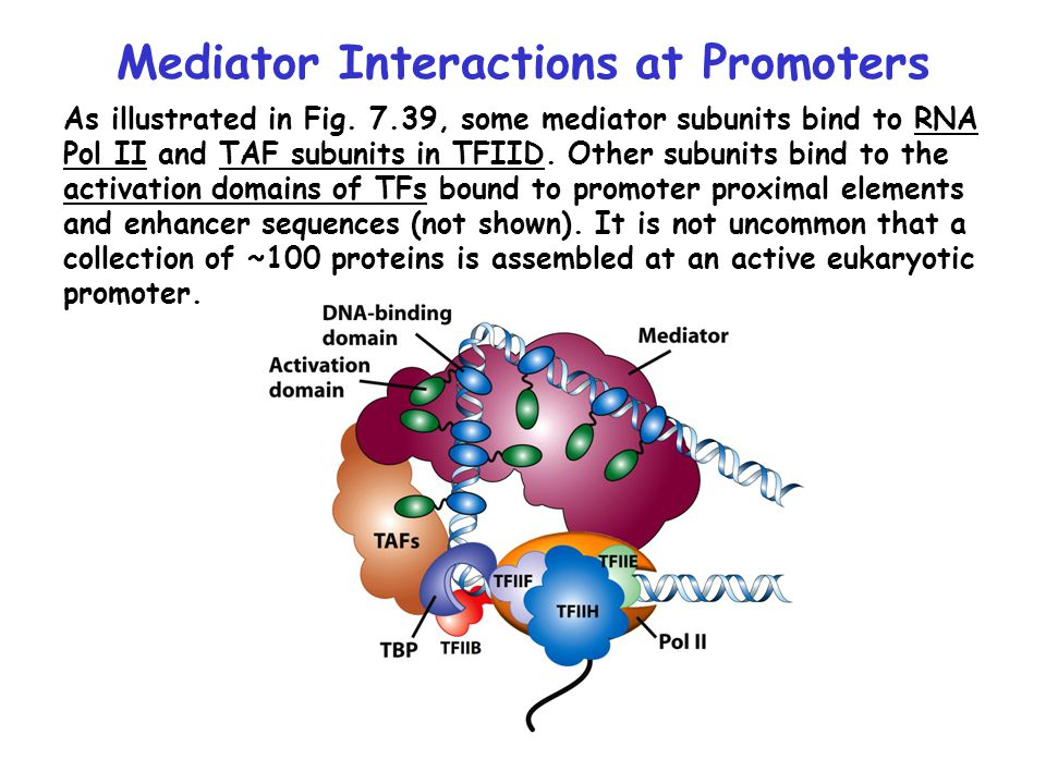 Mediator Interactions at Promoters