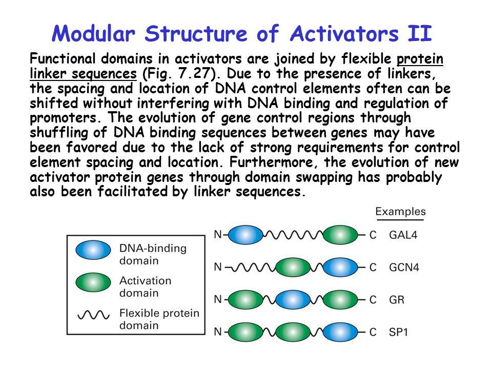 Modular Structure of Activators II