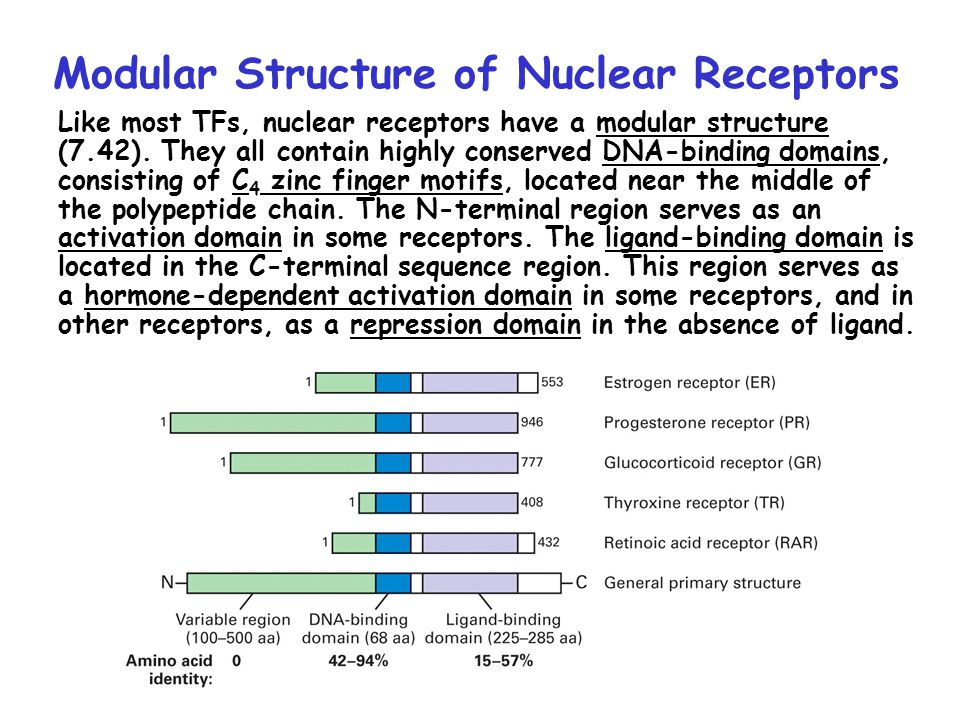 Modular Structure of Nuclear Receptors