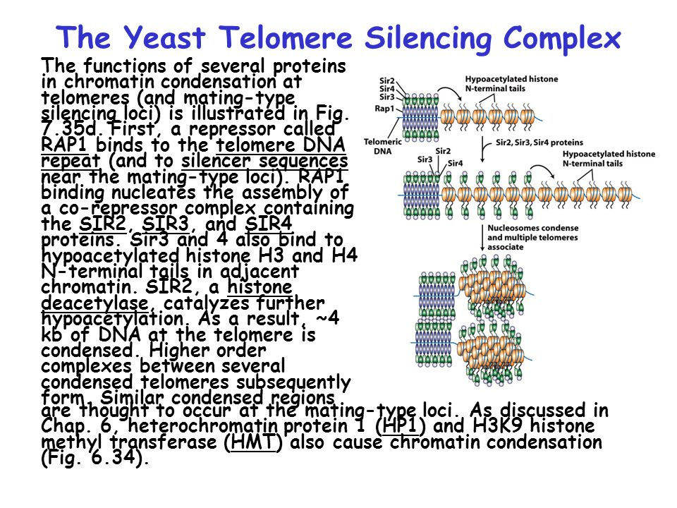The Yeast Telomere Silencing Complex