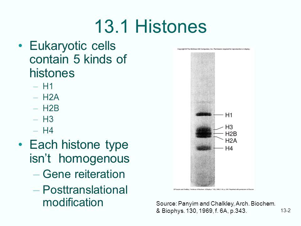 13.1 Histones Eukaryotic cells contain 5 kinds of histones
