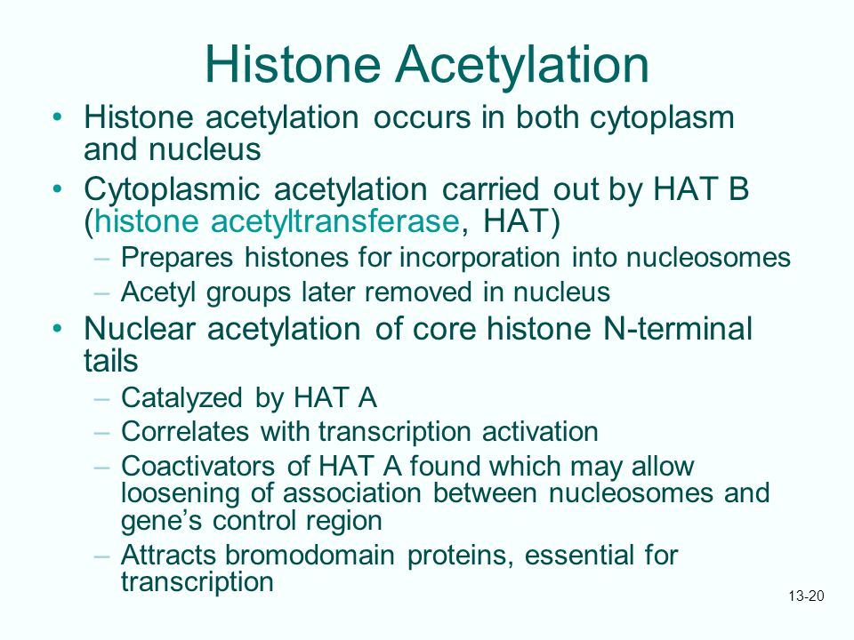 Histone Acetylation Histone acetylation occurs in both cytoplasm and nucleus.