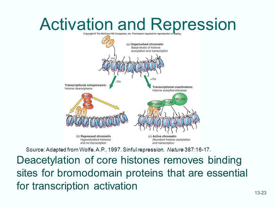 Activation and Repression