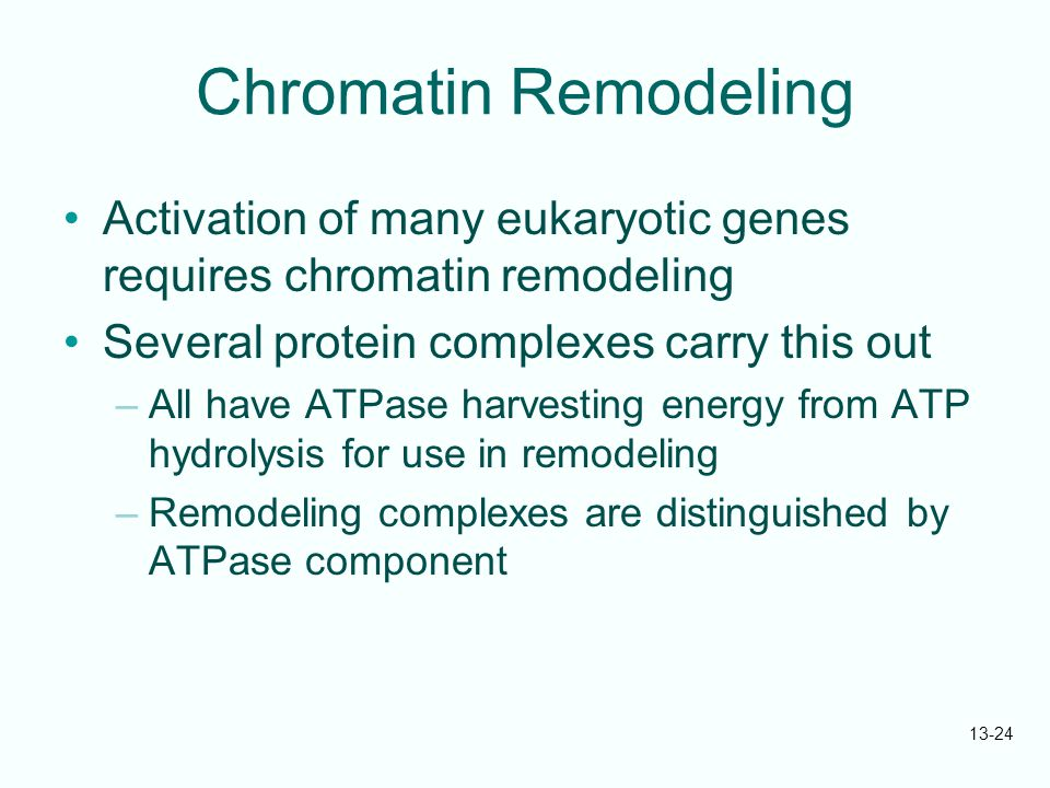 Chromatin Remodeling Activation of many eukaryotic genes requires chromatin remodeling. Several protein complexes carry this out.