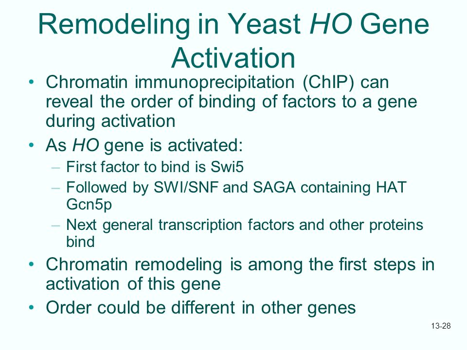Remodeling in Yeast HO Gene Activation