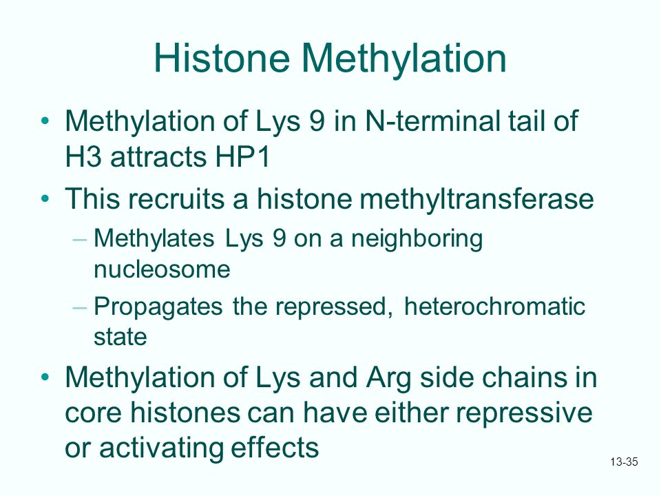 Histone Methylation Methylation of Lys 9 in N-terminal tail of H3 attracts HP1. This recruits a histone methyltransferase.
