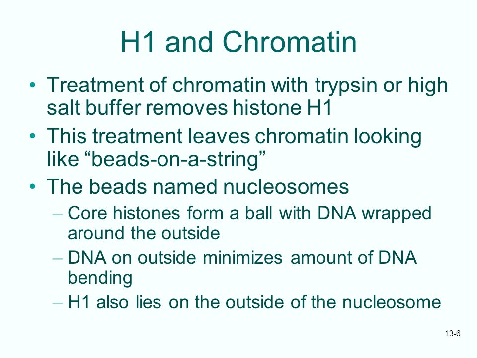 H1 and Chromatin Treatment of chromatin with trypsin or high salt buffer removes histone H1.