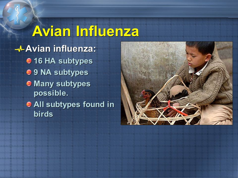 Avian Influenza Avian influenza: 16 HA subtypes 9 NA subtypes