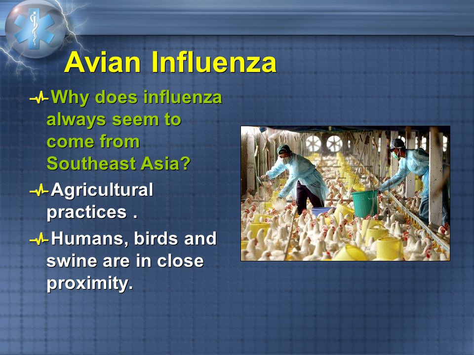 Avian Influenza Why does influenza always seem to come from Southeast Asia Agricultural practices .
