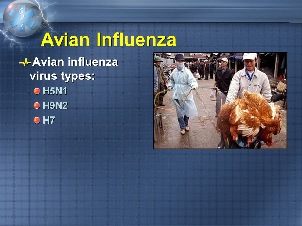 Avian Influenza Avian influenza virus types: H5N1 H9N2 H7