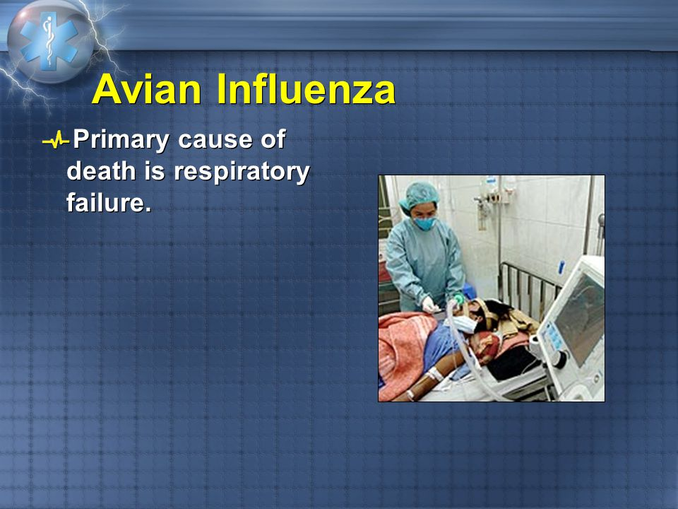 Avian Influenza Primary cause of death is respiratory failure.