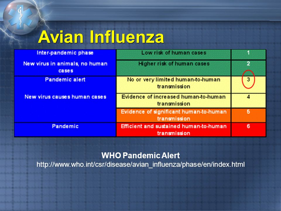 Avian Influenza WHO Pandemic Alert