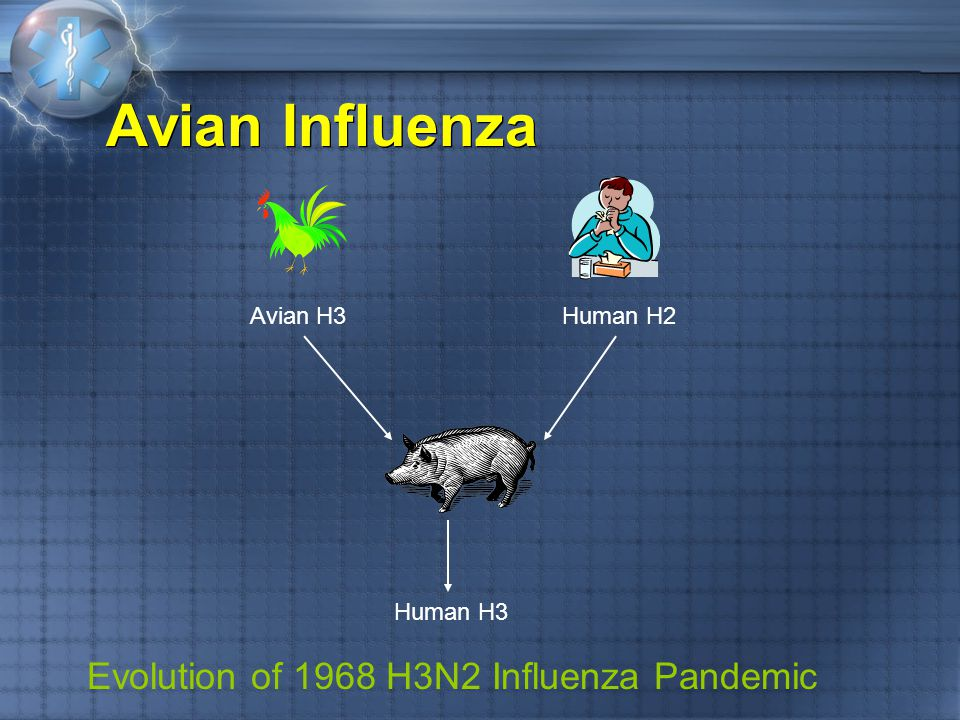 Evolution of 1968 H3N2 Influenza Pandemic