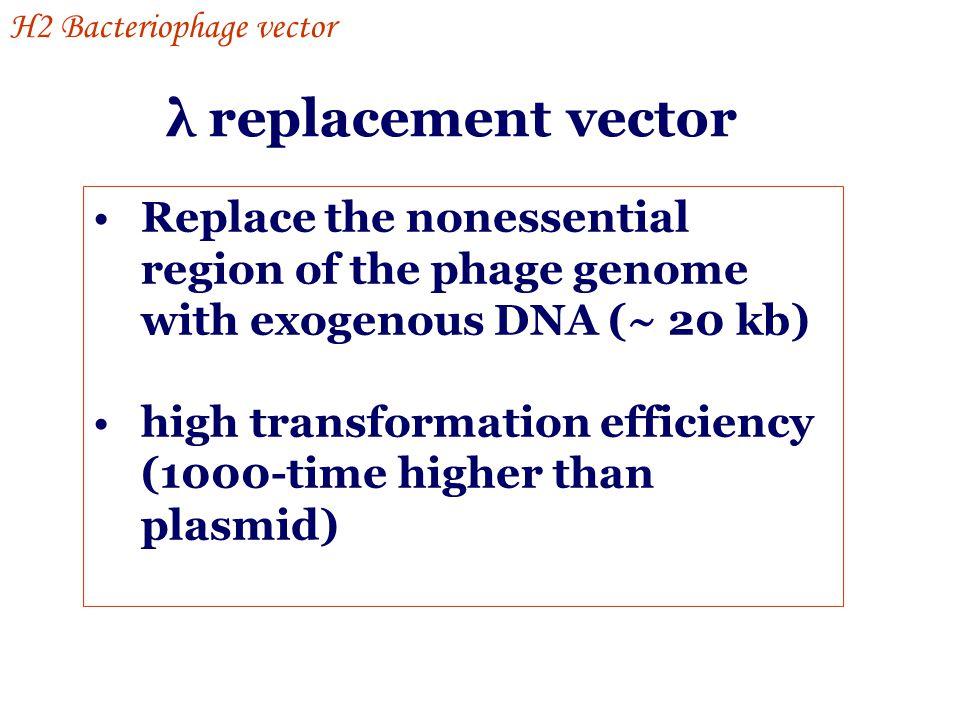 H2 Bacteriophage vector