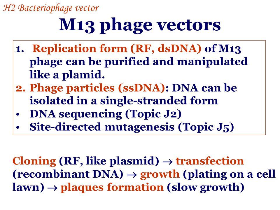 M13 phage vectors H2 Bacteriophage vector