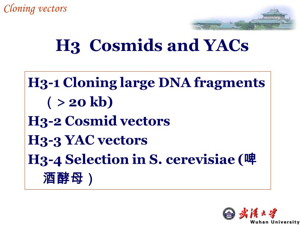 H3 Cosmids and YACs H3-1 Cloning large DNA fragments (> 20 kb)