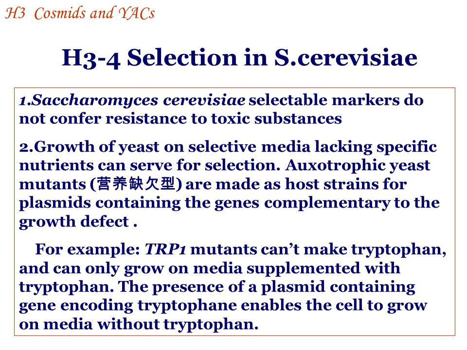 H3-4 Selection in S.cerevisiae