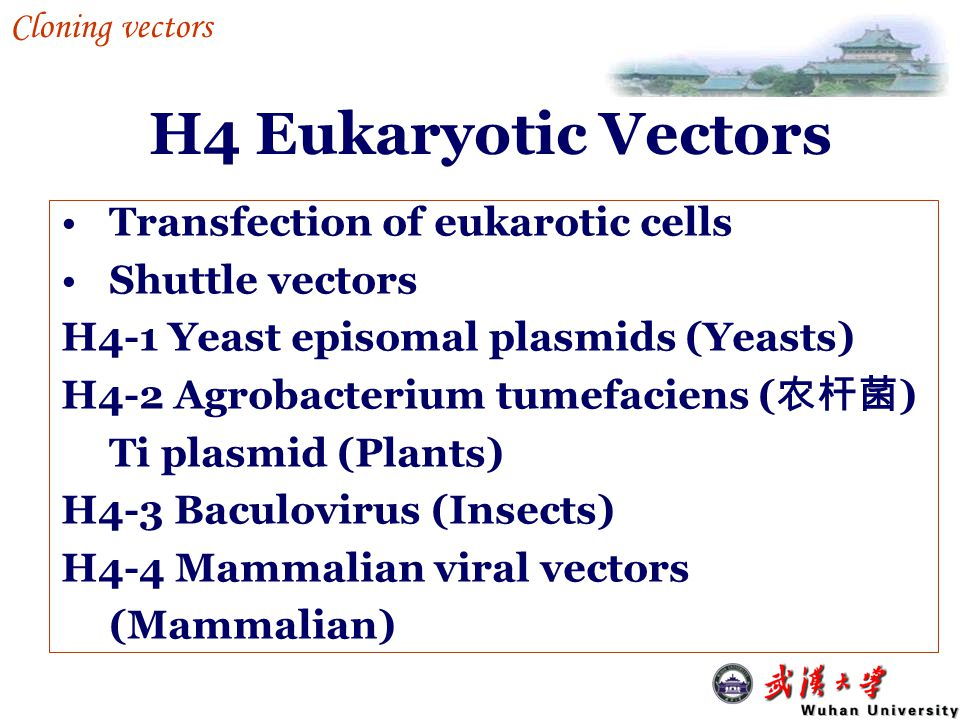 H4 Eukaryotic Vectors Transfection of eukarotic cells Shuttle vectors