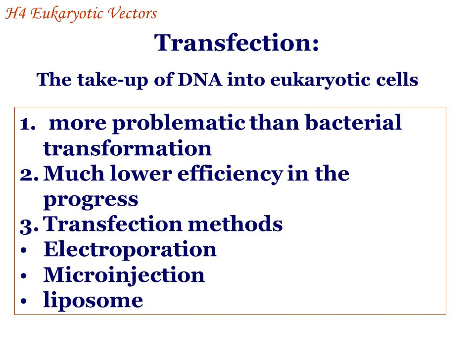 Transfection: more problematic than bacterial transformation