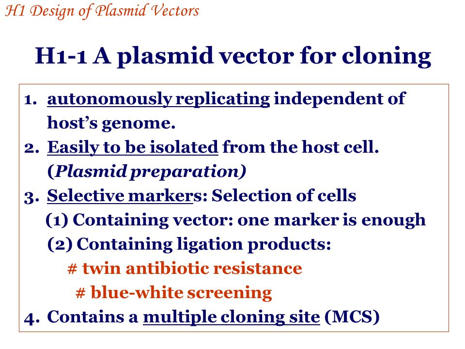 H1-1 A plasmid vector for cloning