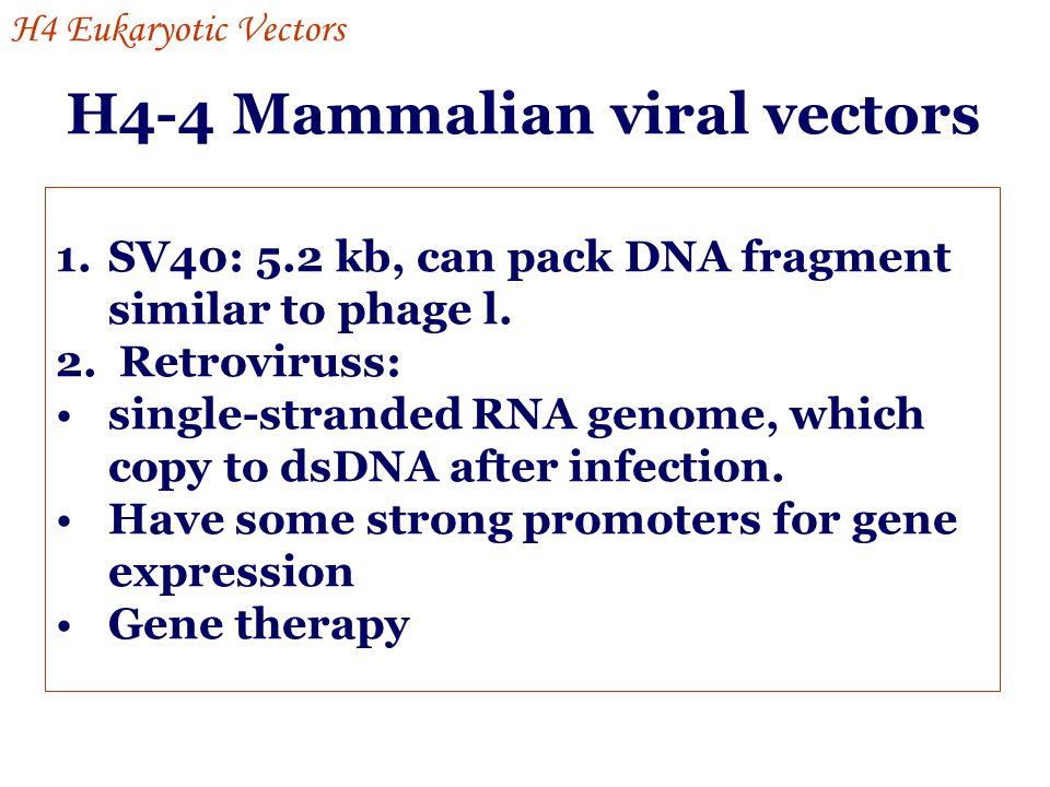 H4-4 Mammalian viral vectors