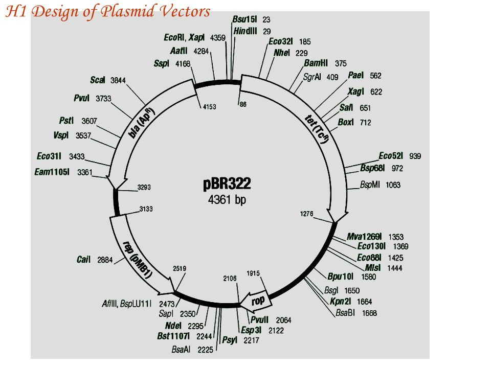 H1 Design of Plasmid Vectors