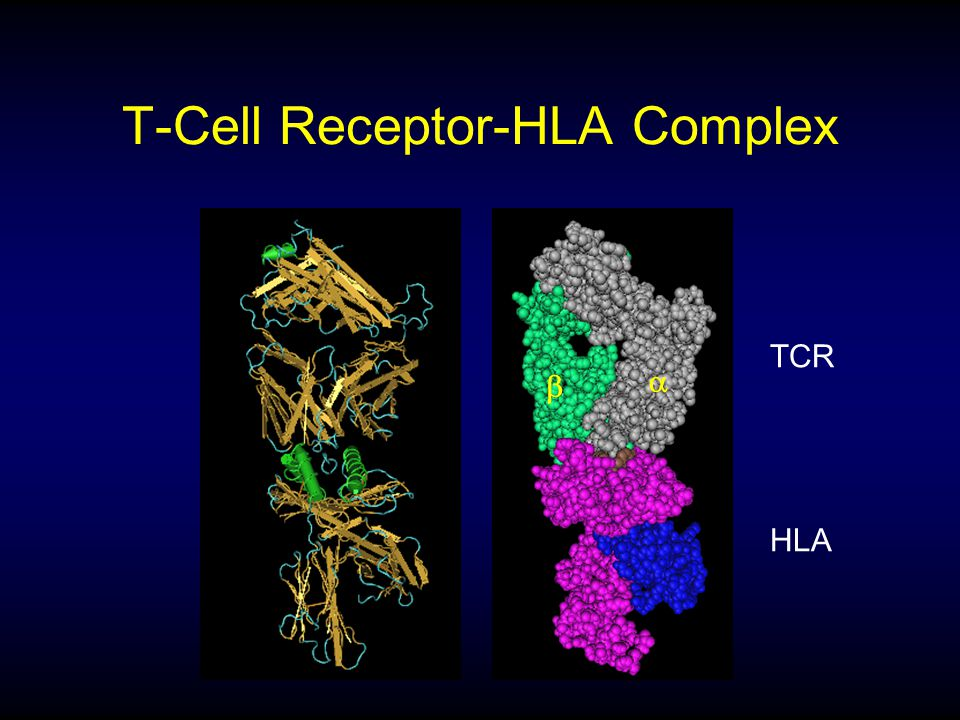 T-Cell Receptor-HLA Complex