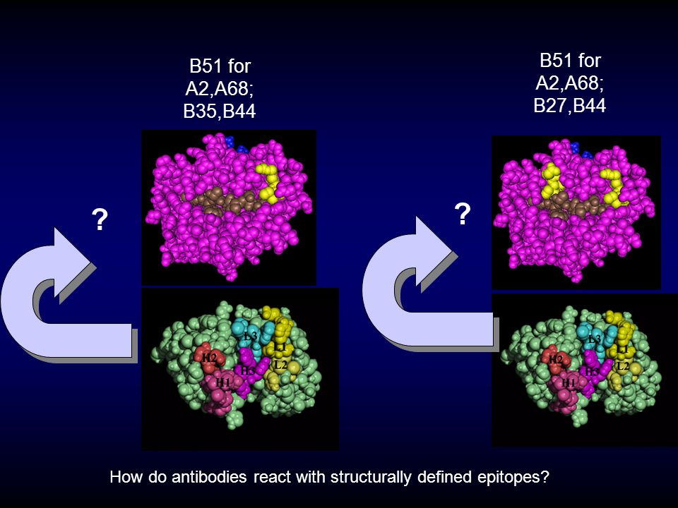How do antibodies react with structurally defined epitopes