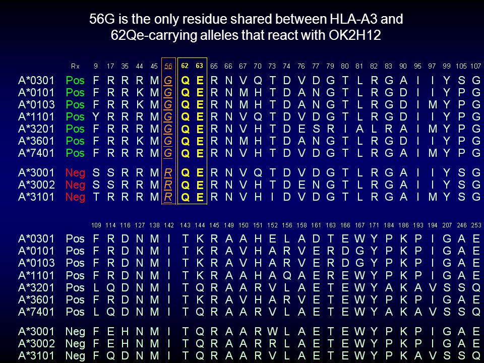56G is the only residue shared between HLA-A3 and 62Qe-carrying alleles that react with OK2H12
