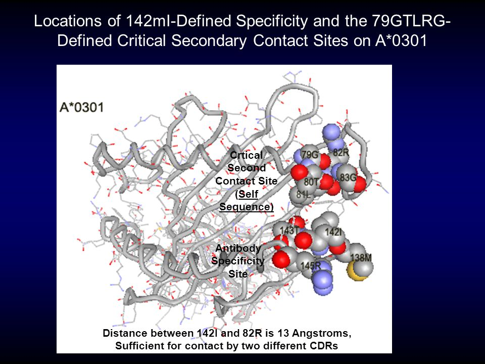 Locations of 142mI-Defined Specificity and the 79GTLRG-Defined Critical Secondary Contact Sites on A*0301