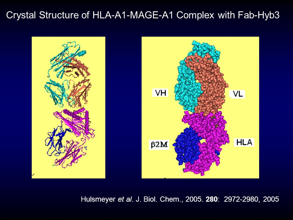 Crystal Structure of HLA-A1-MAGE-A1 Complex with Fab-Hyb3