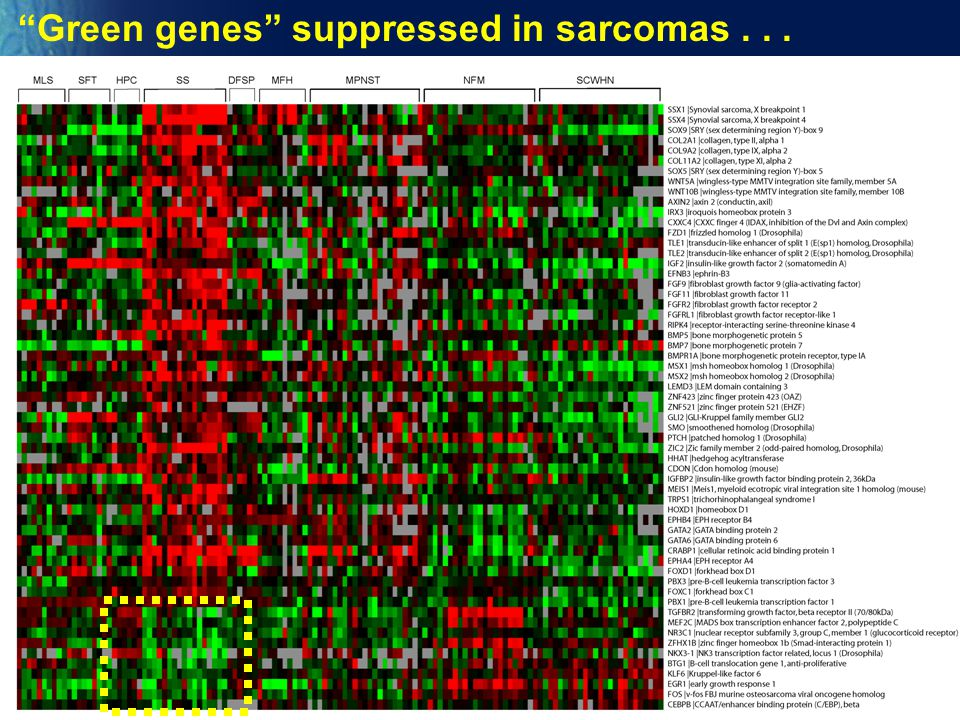 Green genes suppressed in sarcomas . . .