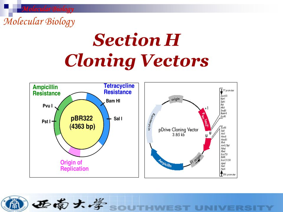 Section H Cloning Vectors - ppt video online download