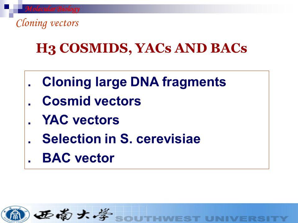 . Cloning large DNA fragments . Cosmid vectors . YAC vectors