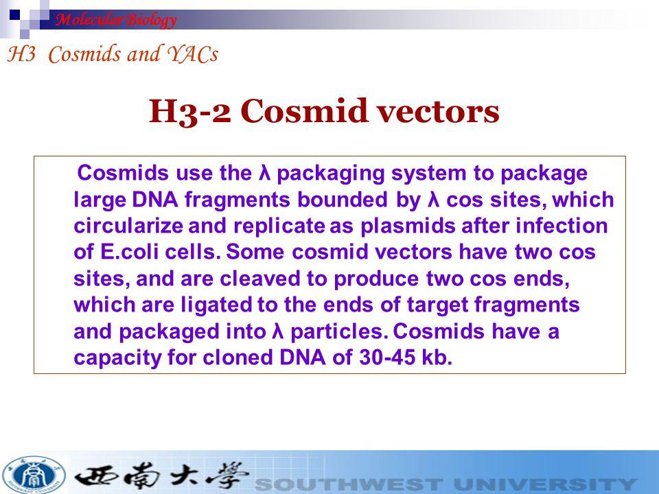 H3-2 Cosmid vectors H3 Cosmids and YACs