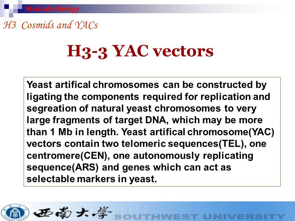 H3-3 YAC vectors H3 Cosmids and YACs