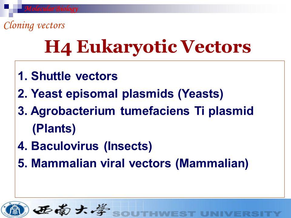 H4 Eukaryotic Vectors 1. Shuttle vectors