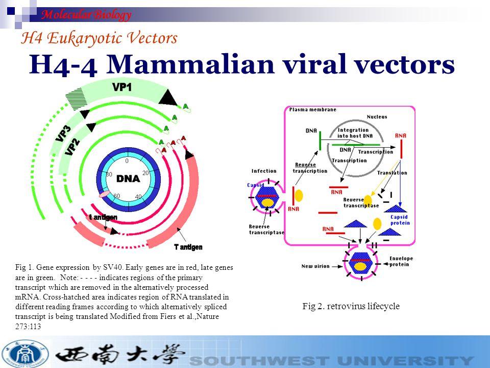 H4-4 Mammalian viral vectors