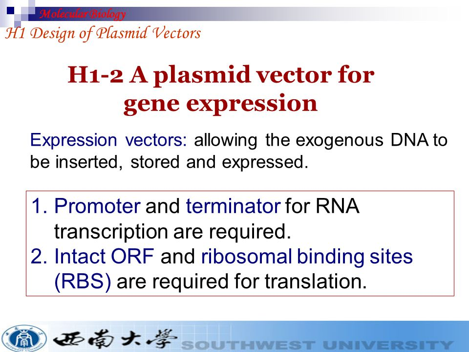 H1-2 A plasmid vector for gene expression