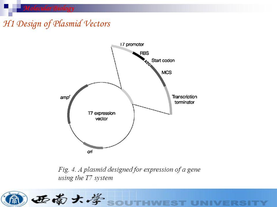 H1 Design of Plasmid Vectors