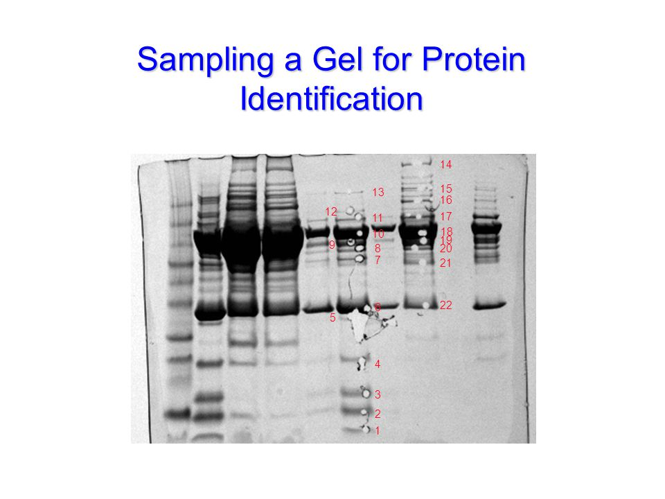 Sampling a Gel for Protein Identification